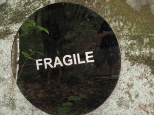 Fragile Like Me